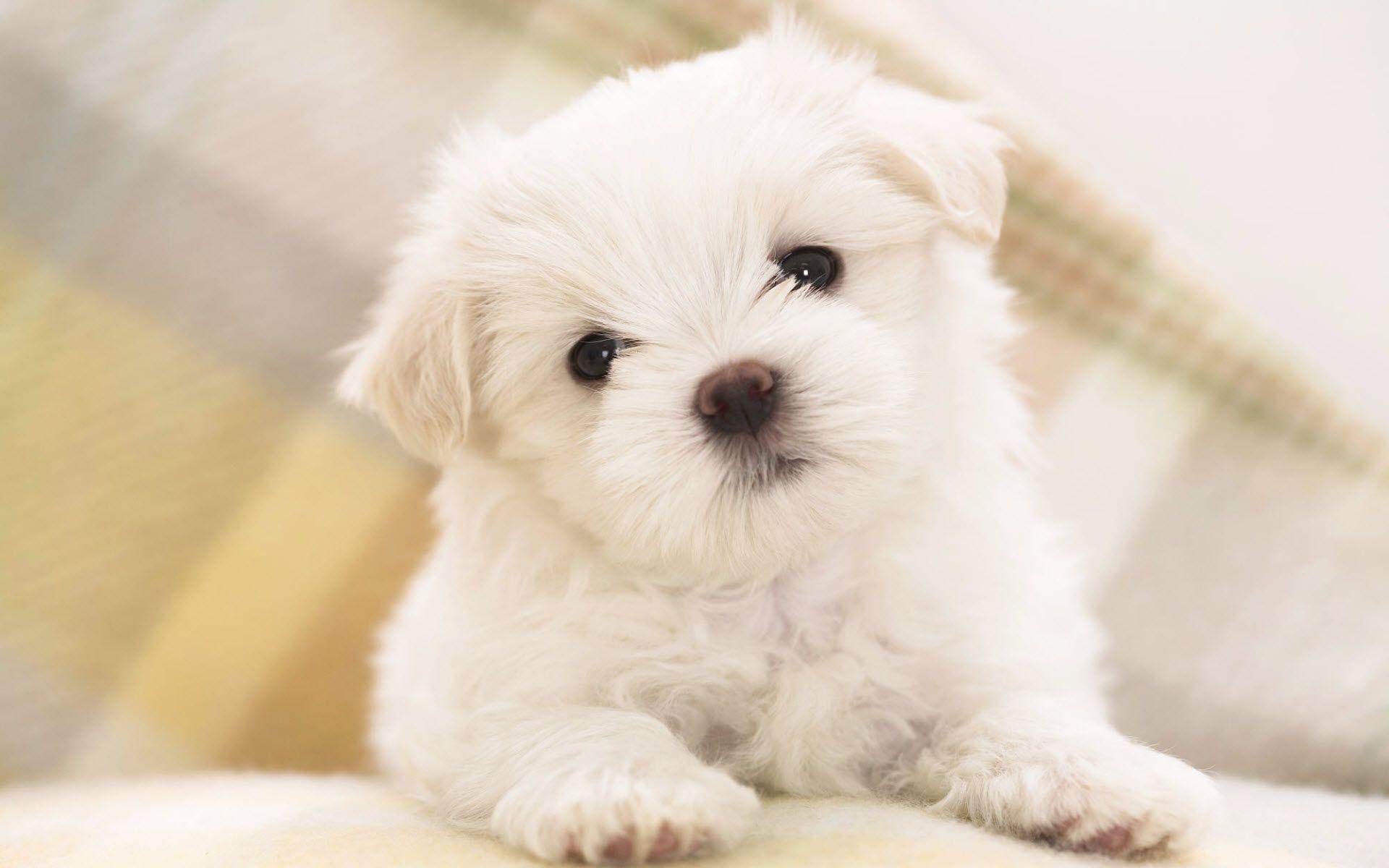 Non Sempre I Cani Di Piccola Taglia Sono I Più Facili Da Gestire