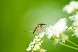 anti zanzare ricetta fai da te