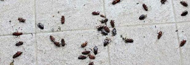 rimedi contro scarafaggi