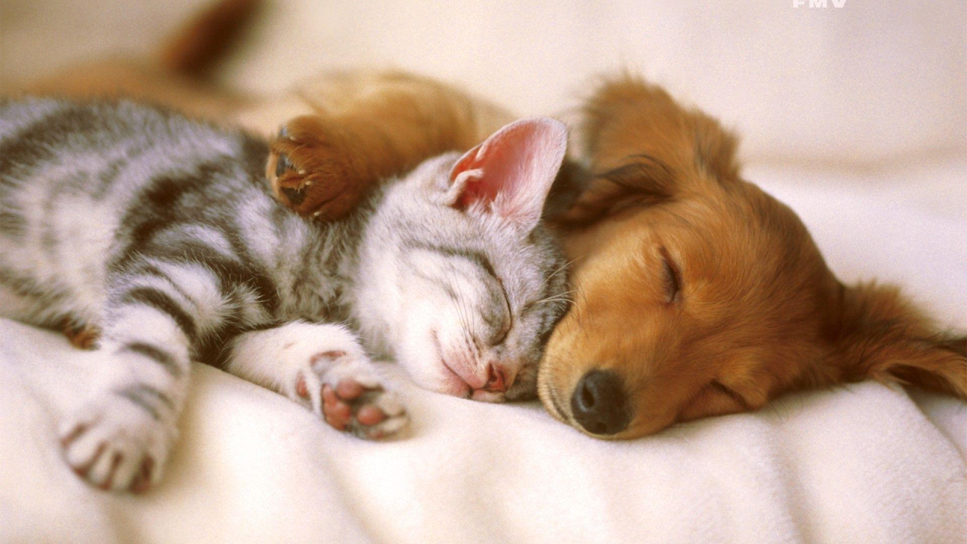 Gli animali ci aiutano a combattere ansia e depressione: migliorano la nostra vita