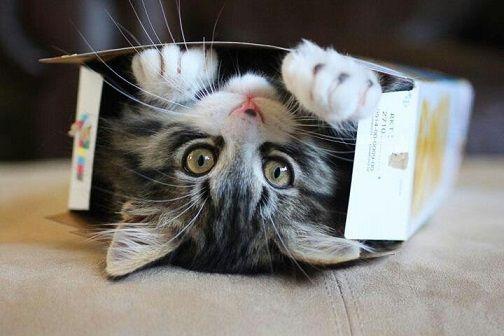gatti curiosità