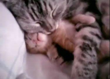 Mamma-gatta-abbraccia-gattino-mentre-fa-brutti-sogni-video