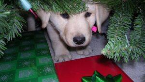 cane-albero