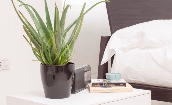 Piante di appartamento facili da gestire che purificano l - Piante che purificano l aria in camera da letto ...