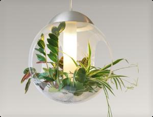 Scopri le tillandsie le piante aeree che non hanno for Pianta dell appartamento da 300 piedi quadrati