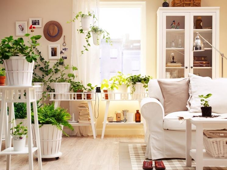 Piante di appartamento facili da gestire che purificano l'aria che respiriamo
