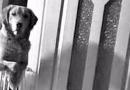 Prendere un cane è per sempre: un cucciolo adottato fissava sveglio tutta la notte i padroni…