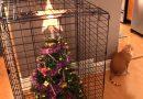 15 idee geniali (alcune improbabili) per proteggere l'albero di Natale dai nostri amici pelosi