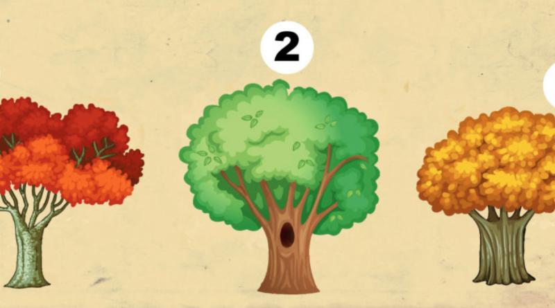 Dimmi quale albero ti piace di più e ti svelerò un grande segreto della tua personalità e del tuo futuro
