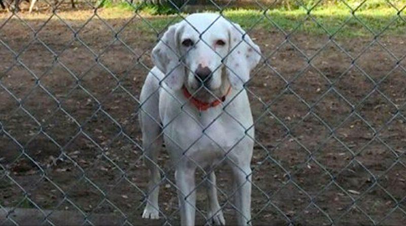 Il cane viene adottato e restituito al rifugio per ben 11 volte. Il motivo ti commuoverà