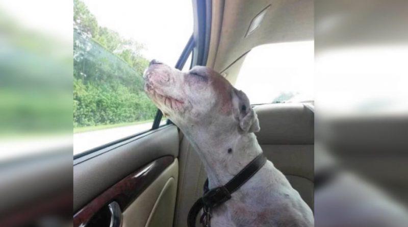 Prima di morire ha scattato un'ultima foto del suo cane. Ma quando l'hanno vista da vicino, la foto è diventata virale