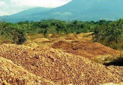 La fabbrica di succo di frutta ha gettato migliaia di bucce d'arancia in un'area deforestata. Guarda 16 anni dopo