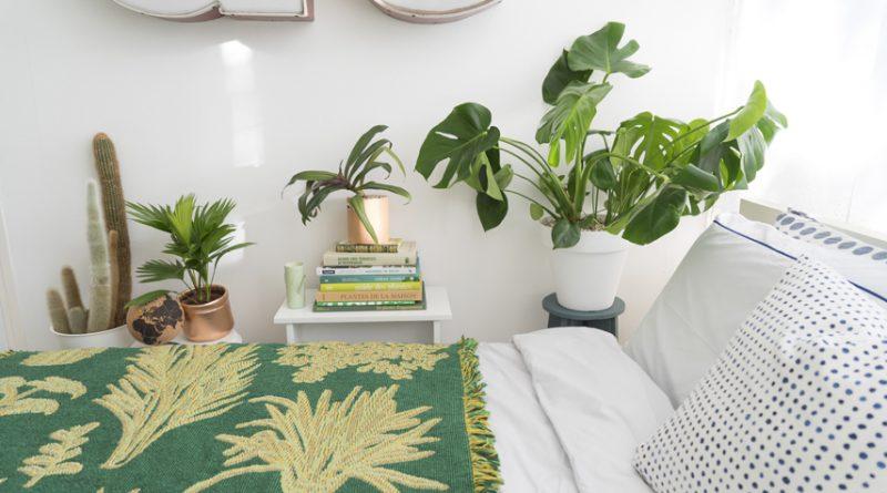 3 piante che generano ossigeno anche di notte puoi - Piante in camera ...