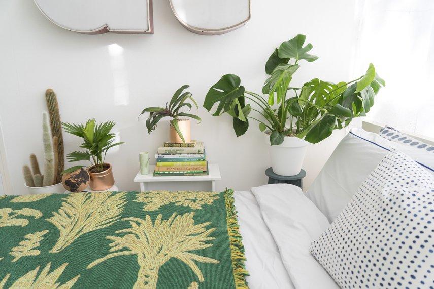 3 piante che generano ossigeno anche di notte puoi metterle in camera da letto - Piante da camera da letto ...