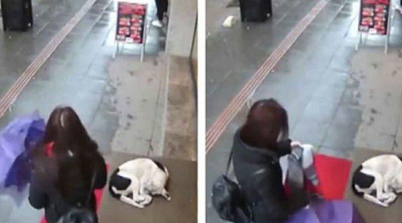 Il cane infreddolito cerca di ripararsi – Guarda la commovente azione di questa donna