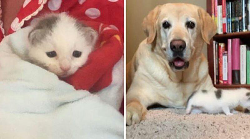 Gattina orfana trovata nel cortile – Il cane di 13 anni diventerà la sua nuova madre