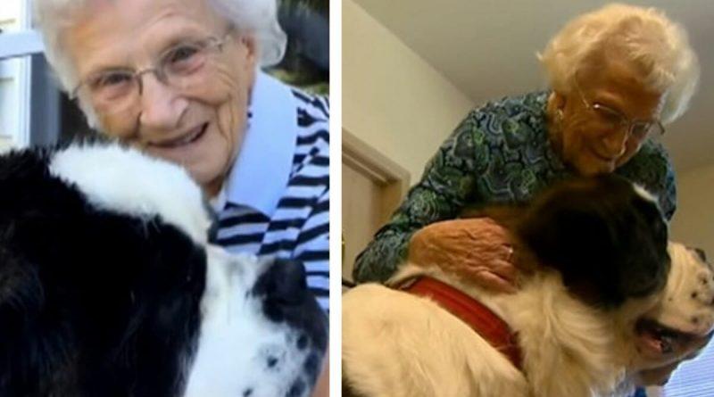 Signora 95 enne non si sente mai sola – Grazie al mitico San Bernardo che rifiuta di lasciarla