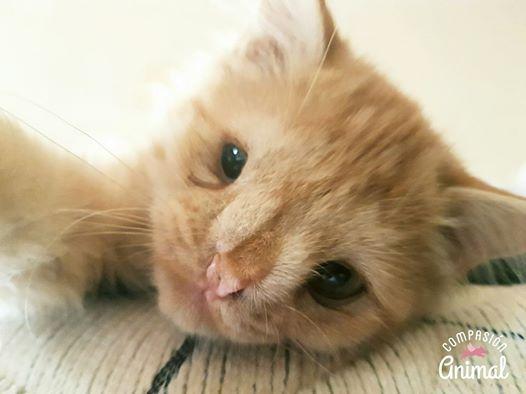 """Gattino viene abbondato dai suoi padroni perché """"è troppo brutto"""" – Ma aspetta di vedere queste foto!"""