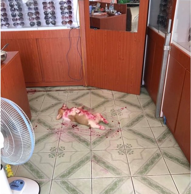 Padrone terrorizzato trova il cane a terra fermo e immobile – Poi scopre scioccato la verità divertente