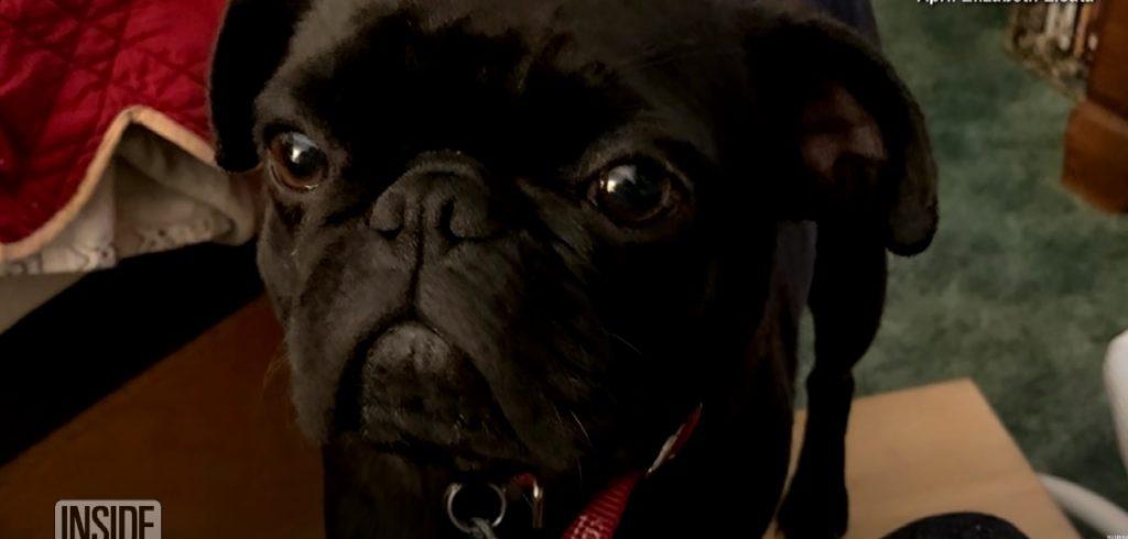 Piper, il cane di famiglia