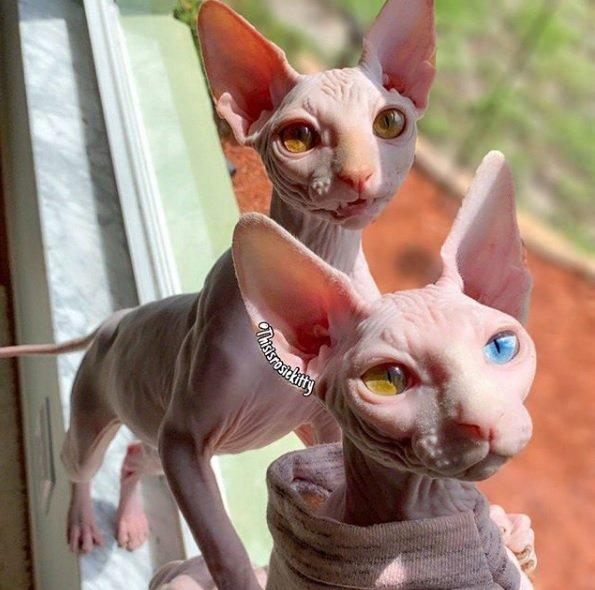 Top gattini piccoli - Donnaweb.net MB03