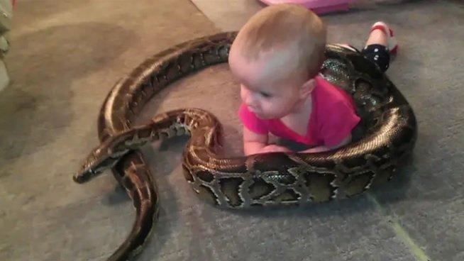 La bambina sembra felice con il suo serpente