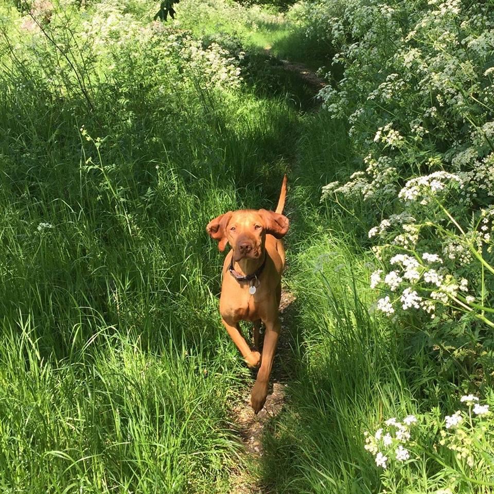cane ruby mentre corre