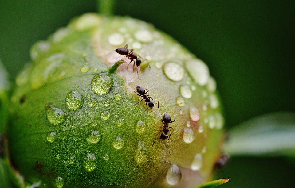 sbarazzati delle formiche con un po di cannella sul pavimento