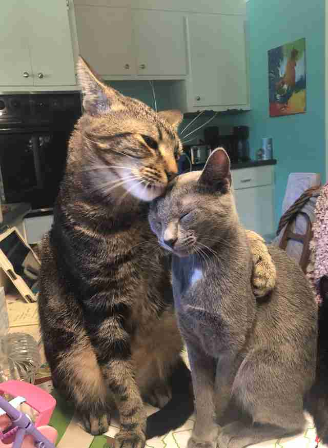 Buddy abbraccia sua sorella Hannah