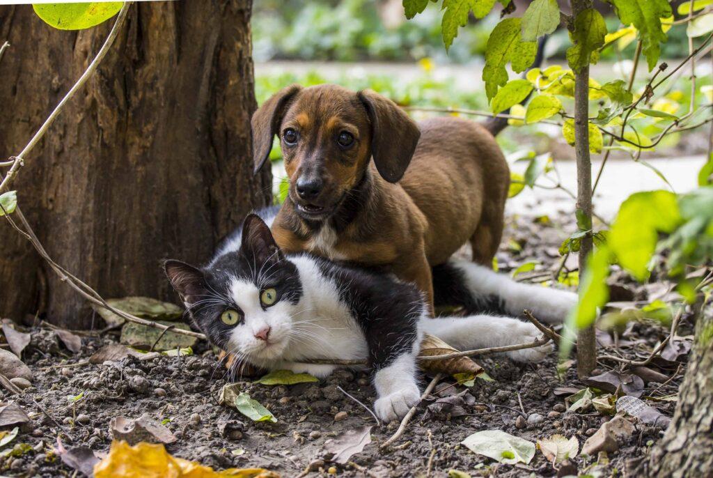 cani e gatti non si odiano