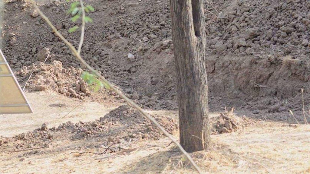 leopardo nascosto nella foto